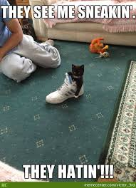 Meme Sneakers - sneaker kitten gonna sneak by victor 3rd meme center