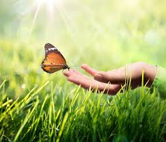 of attraction and butterfly meaning