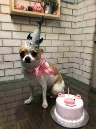Birthday Cake Dog Meme - birthday cake dog meme 4birthday info