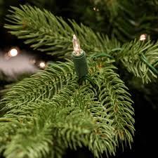noble fir christmas tree ne wall