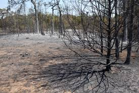 Elgin Oregon Wildfire by Central Texas Wildfire Updates September 8 2011 Kut