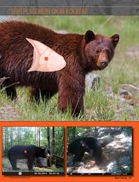 black bear anatomy shot placement image collections learn human