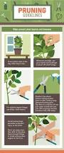 pruning native plants vegetable garden pruning guide gimme info