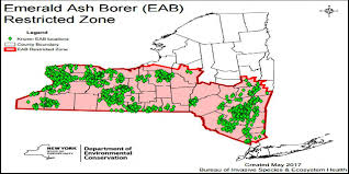 emerald ash borer map taking wood to c may be a problem this summer