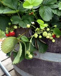 Strawberry Garden Beds Garden Beds Pockets And Pots Oh My How To Garden Tip Junkie