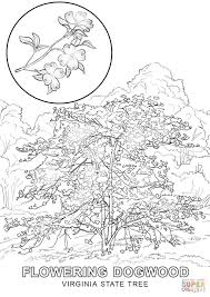 virginia state tree coloring page free printable coloring pages