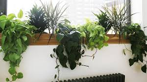 low light plants for office great indoor plants low light home furniture design