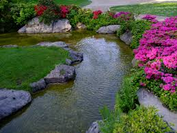 free images plant lawn flower pond backyard