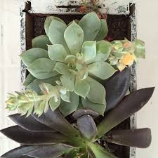 how to make a diy window box garden for succulents
