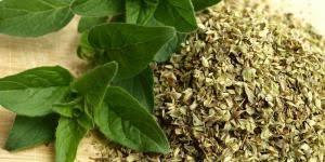origan frais en cuisine chocolat chaud maison recette traditionnelle facile
