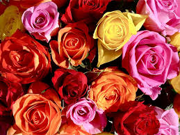color roses sending the right message the color of a it forwardmom
