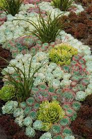 sunshineandsucculents wow wow wow cacti wonderland pinterest