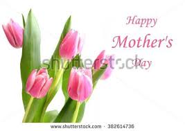 Flowers For Mum - thank you tulip flowers beautiful card stock illustration