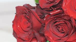 red roses flowers bouquet romantic romance love valentines day