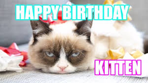 Happy Kitten Meme - meme creator happy birthday kitten meme generator at memecreator org
