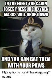 25 best memes about thanksgiving cat thanksgiving cat memes