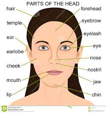 The Human Body Picture Parts Of The Human Head Www Uocodac Com