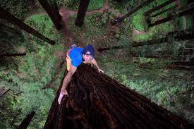 chris sharma free climbs redwood tree for giant ascent