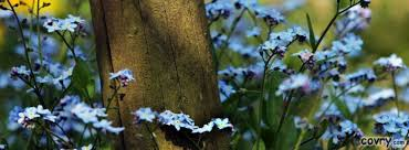 Flowers Near Me - forget me not flowers near a wooden pole cover covry com