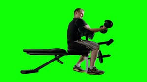 Bench Bicep Curls Man Working Out Doing Bicep Curls With Weights On Exercise Bench