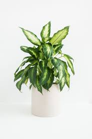 best low light plants for indoors gardenabc com