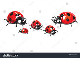 family group insects spotted ladybugs crawling stock vector