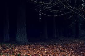 dark woods wallpaper by designerfied on deviantart