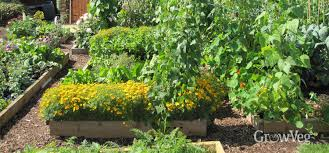 choosing a location for your new vegetable beds