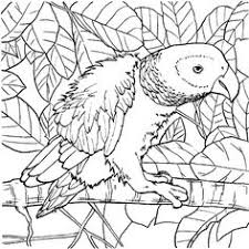 parrot coloring pages click to see printable version of budgerigar parrot coloring page