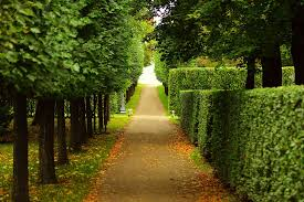 free photo walkway trimmed bushes trees free image on