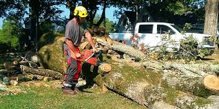 considerations to make while hiring tree removal service housisms