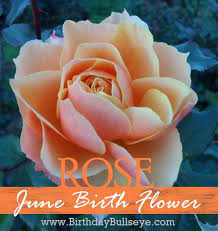 June Flowers - june birth flower rose meaning love and beauty tattoo ideas