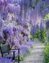 purple flower garden landscaping ideas