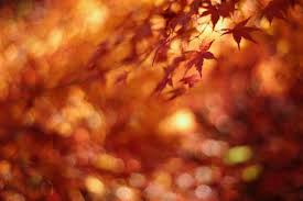 thanksgiving pictures for facebook cover 60 breathtaking fall images for your inspiration