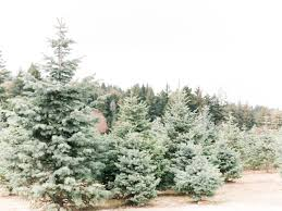 santa cruz christmas tree farm family lifestyle portraits