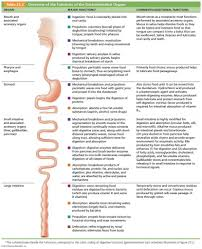 diagram of digestive system and functions download wiring diagram