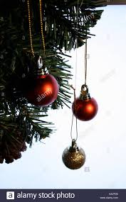 and gold baubles hanging on tree stock