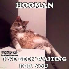 Meme Waiting - hooman i ve been waiting for you cat meme pmslweb