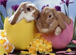 Cute Easter Meme - cute easter animal pictures happy easter 2018