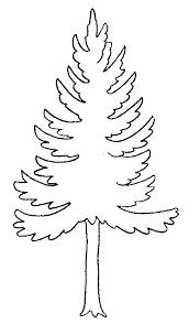 coloriage  arbres  arbresapin6