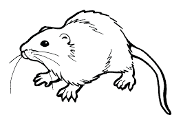 coloring page of a rat rat coloring page free rat coloring pages rat fink coloring pages