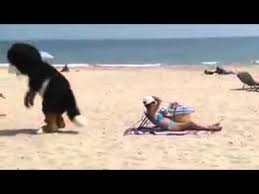 imagenes chistosas en la playa perro chistosos en la playa youtube
