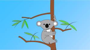 koala wallpaper album on imgur