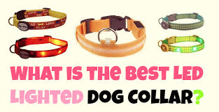 dog collar lights waterproof what are the best led light up dog collars doggytoggery