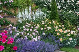 english roses are some of the best loved high performance flowers