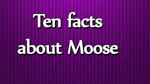 ten facts about moose all about facts utubetips youtube