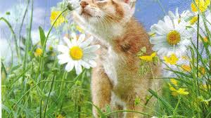 Hd Thanksgiving Wallpapers Cat Field Daisies Sweet Smelling Animals Green Cats Kitten Lovely