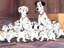 dalmation breaks record largest litter 18 puppies daily