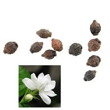 Fragrant Jasmine Plant - compare prices on fragrance jasmine plant online shopping buy low