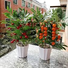 cherry home decor home decor fruit orange cherry tree emulate bonsai simulation